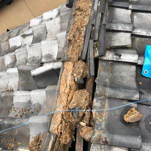 瓦などの空気層のある屋根での鳥・コウモリの巣